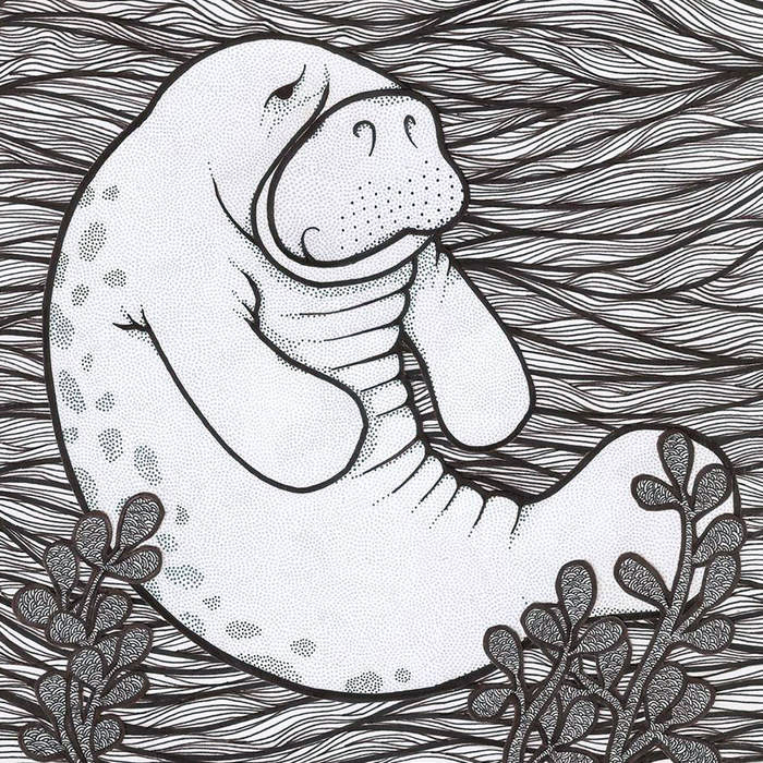 ALBUM COVER-MAN VS MANATEE