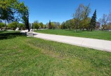 Recovering grass at Victoria Park, London, Ontario. Photo by Dave Knill for LondonFuse.