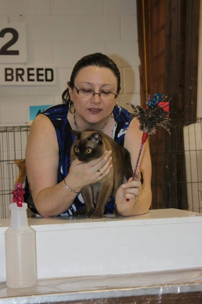london ontario cat show judge