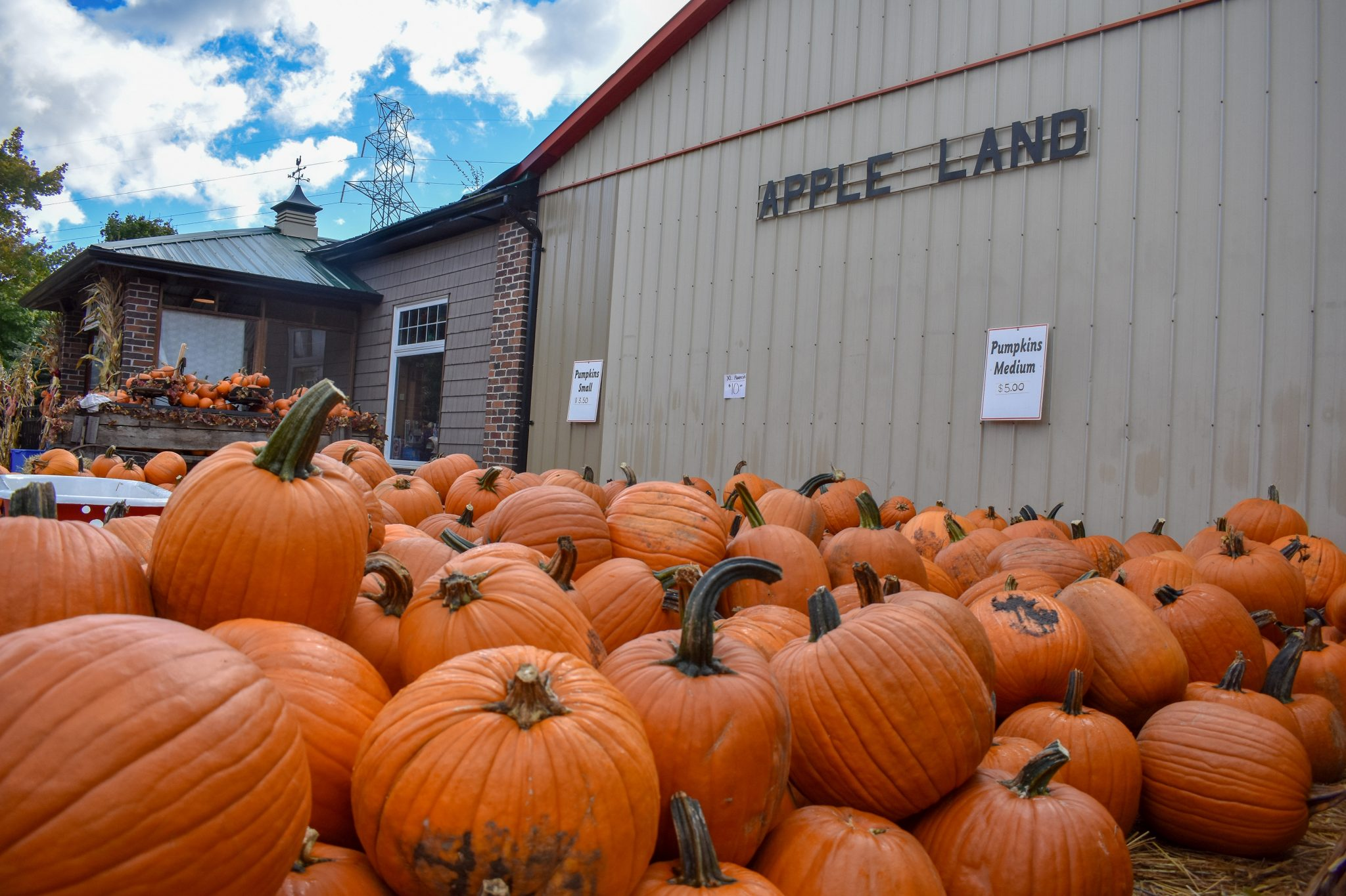 Pumpkins sit ready to go home next to the Apple Land Station store. Photo by Laura Thorne.