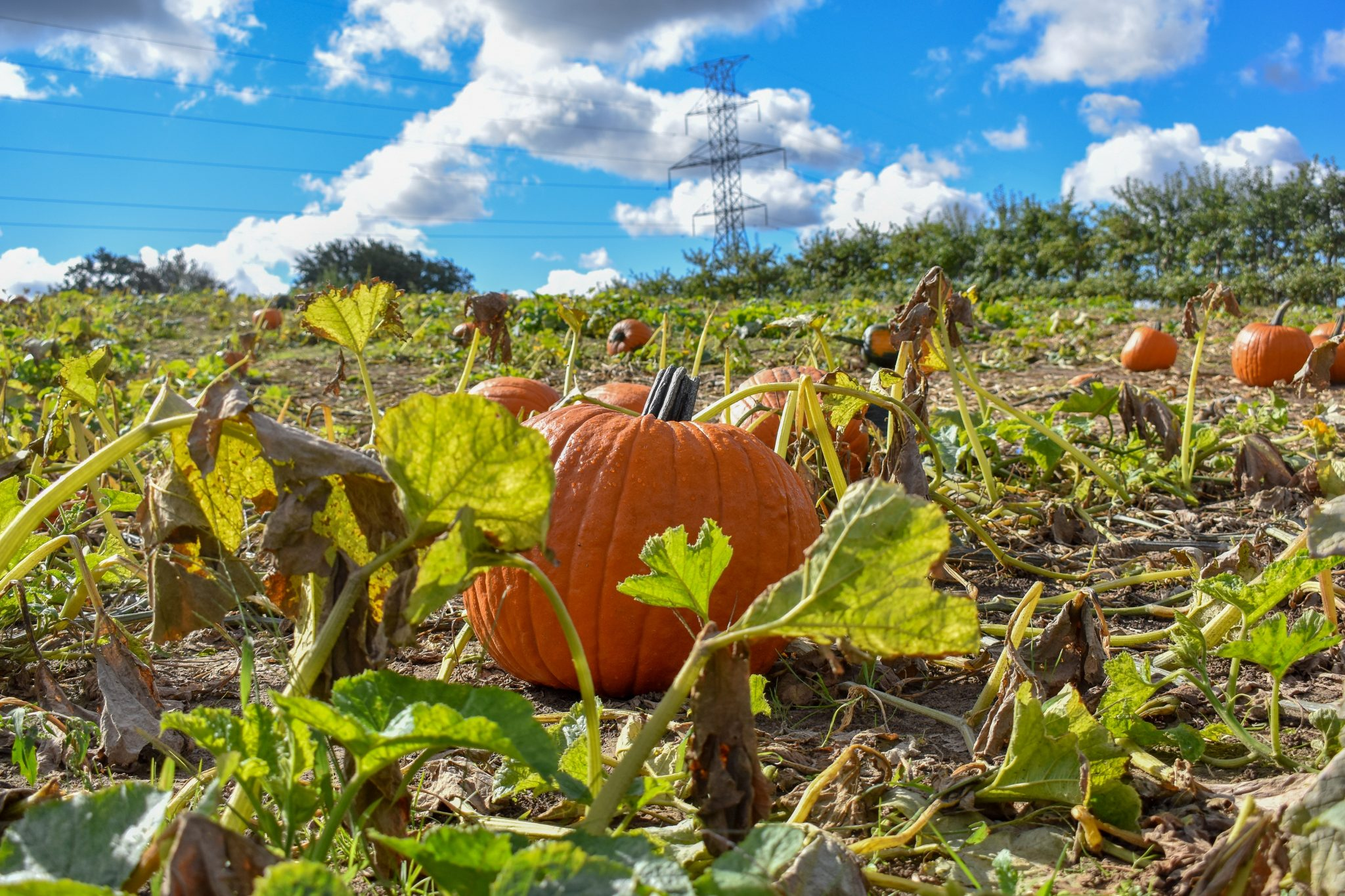 Don't miss out on the ample photo opportunities in the pumpkin patch. Photo by Laura Thorne.