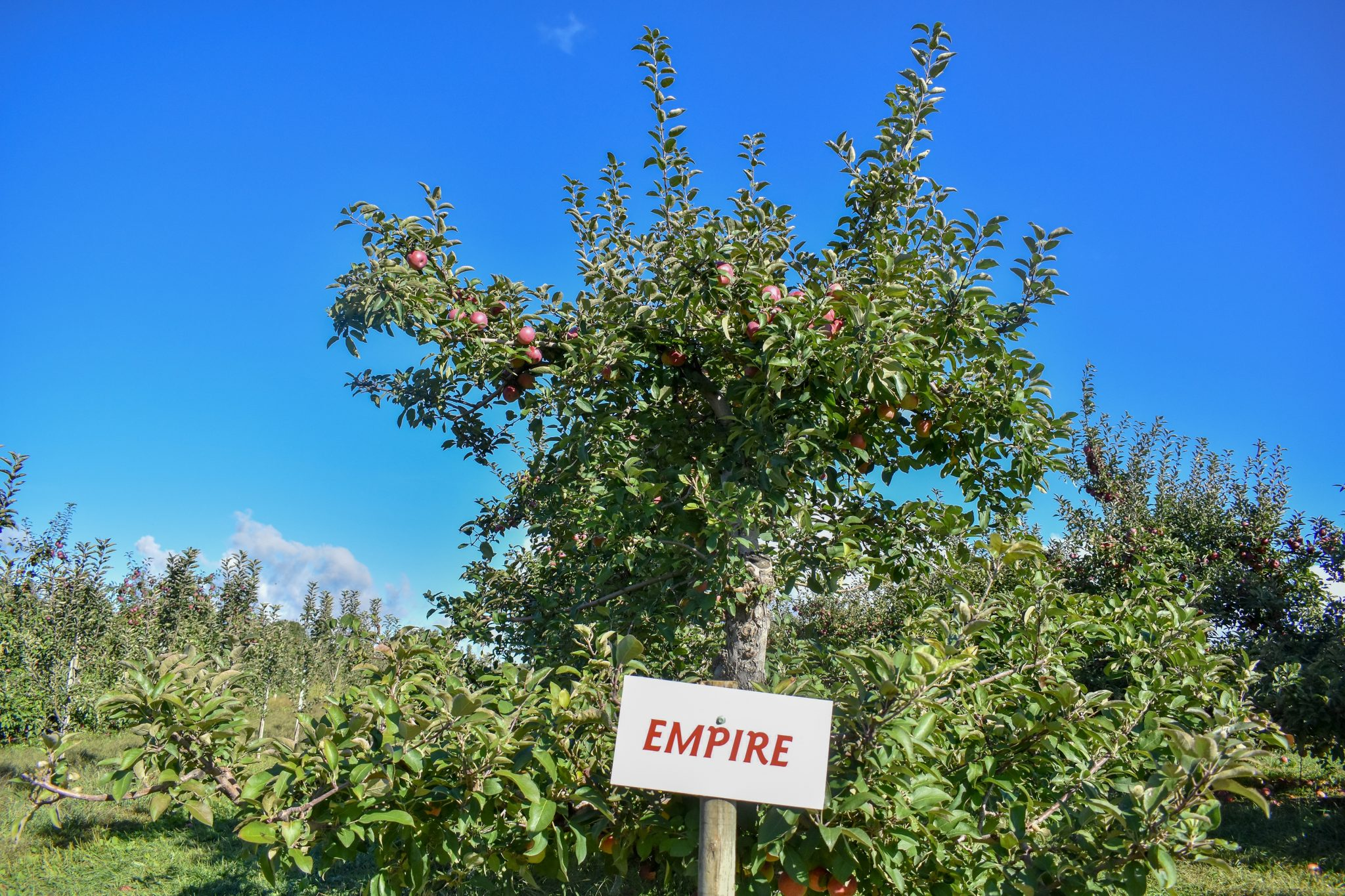 Courtland, Gala, Empire, McIntosh, Granny Smith – there are over 15 varieties available at Apple Land Station throughout the season. Photo by Laura Thorne.