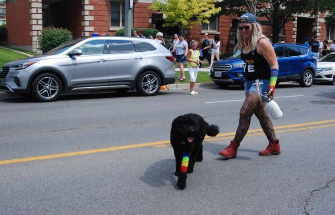 A black dog with a rainbow leg warmer walking with its owner at the 25th Annual London Pride Parade