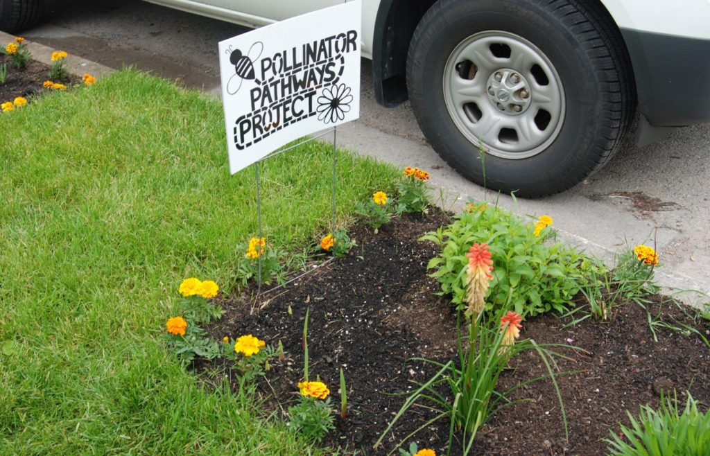 "A small garden in London, Ontario that says ""Pollinator Pathways Project"" on it."