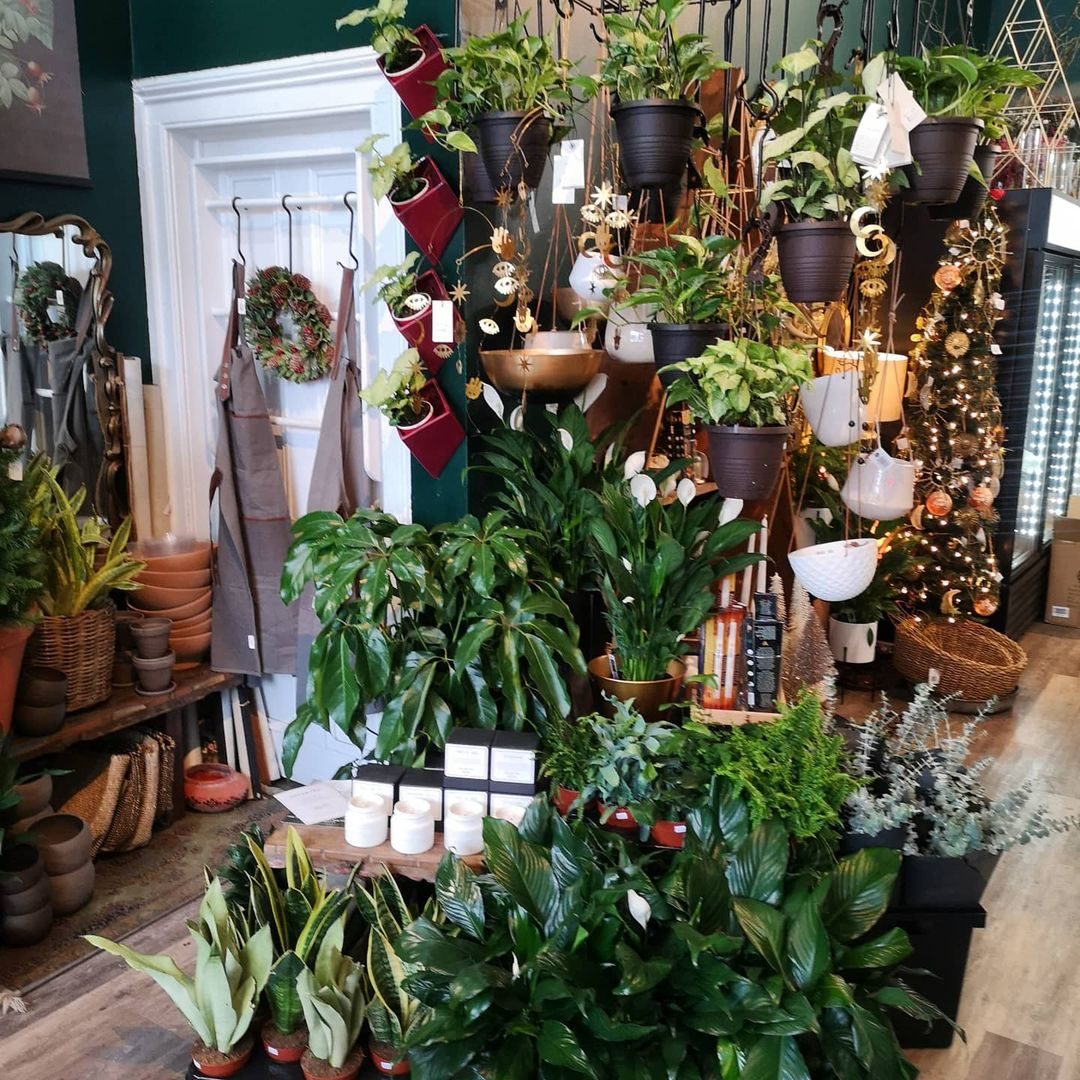 A room filled with plants and gifts.