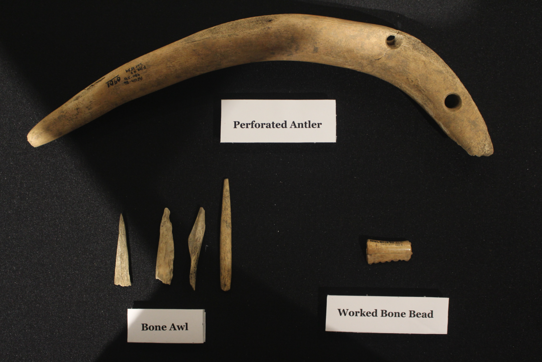 Archaeological finds are displayed on a black packground. From top to bottom, left to write, includes a perforated antler, bone awl, and worked bone bead.