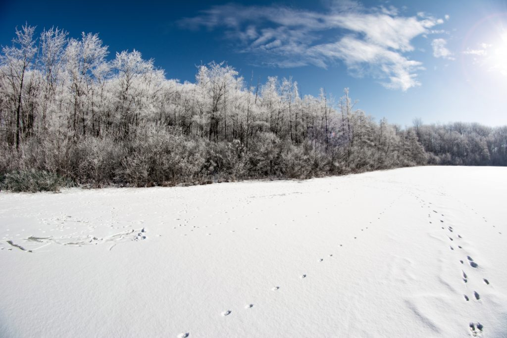 An image of a forest covered in snow during the day.