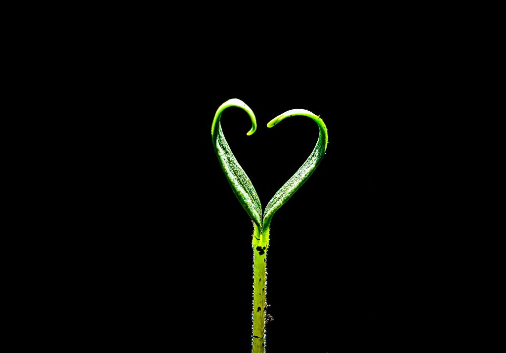 An image of baby leaves curling into each other to form a heart shape.